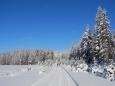 Stoupání k Oblíku na fotce nijak dramaticky nevypadá, ale je dlouhé a místy i náročné. Přemrzlý sníh, který na rovince trochu vadí, tady zase pomahá. Ani nemusíme běžky mazat.