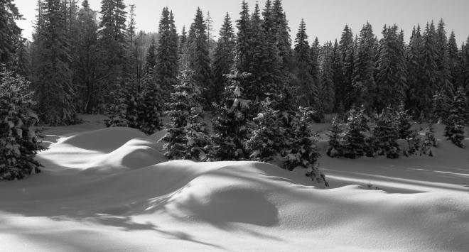 Zkouším stíny v protisvětle. V PC tyto fotky převádím do černobílé. Kontrast tak víc vynikne.