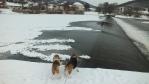 moje psí holky ...