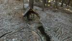o studánky na Plešivci se starají trampové