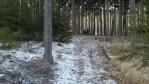 ještě kousek lesní cestou