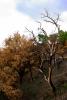 Národní park Aspromonte - ohořelé stromy jsou zde poměrně častý jev