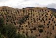 Národní park Aspromonte