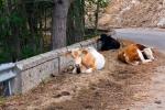 Národní park Aspromonte - sem se nehodí žádný spěch, pokud ovšem opodál zrovna nestojí býk