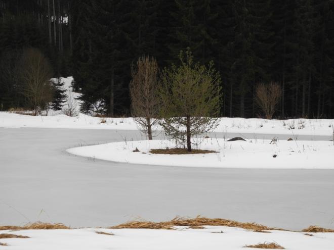 Dostat se k břehu pro lepší kompozici fotky není lehké. Pod sněhem jsou skryty podmáčené prohlubně a každým krokem hrozí propadnutí.