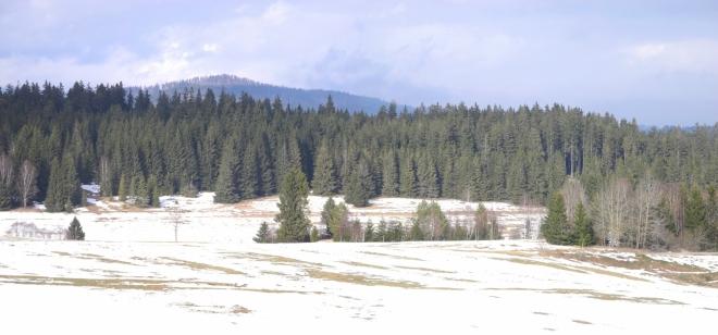 Údolí Studené Vltavy zdobí koruna vrcholových bučin Stožce (1 065m).