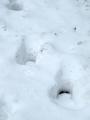Další mohutné stopy přiřazuji losům, kteří zde kolem Lipna často migrují.