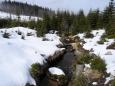 Stocký potok pramení nedaleko vrcholu Plechého (1 378m).
