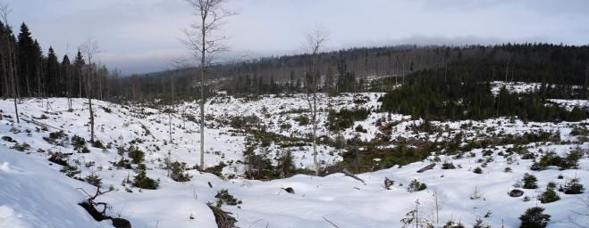 Panorama údolí Stockého potoka.