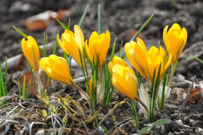 Jaro se přes chladný počátek dubna snaží dohnat to, co zameškalo...
