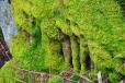 Jedna z pověstí o Svatoboru praví, že v hoře je ukrytý poklad. Mezi dvěma růžovými keři je vstup do tajemné jeskyně, která vede do velké síně, rozdělené velkými krásně zdobenými sloupy. Tam je podle pověsti svatoborský poklad, ze kterého by mohla být Sušice třikrát postavena znovu ve vší své kráse. Vchod do jeskyně kdysi náhodou objevil stařec z Dolejšího předměstí, ale protože podlahu pokrývala voda a on si svítil jen sirkami, rozhodl se, že se do jeskyně vrátí v létě, až voda opadne. Nikomu o svém nálezu neřekl. Ale v zimě se rozestonal a na své smrtelné posteli předal tajemství svým přátelům. Nemohl jim už ale vchod do jeskyně ukázat. Ti již nikdy potom tajnou chodbu nenašli.Na nás se však štěstí usmálo. Ten starý vstup jsme našli. Protože už z první pohled dovnitř jeskyně skrz staré, mechem porostlé mříže prozradil, že uvnitř je voda, rozhodli jsme se, že se do ní vrátíme v létě, až opadne. Zatím o ní nic víc nikomu neřekneme...