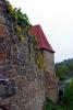 Zvíkov - Tařice skalní (aspoň zde na Zvíkově) roste převážně na kamenných zdech
