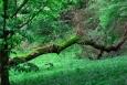 Orlík - z parku