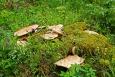 Orlík - tyto houby jsme ještě neviděli
