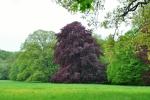 ... nebo se projdi zámeckým parkem, krajinou plnou jarních barev a vůní ...