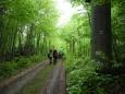Smaragdová zeleň uklidňuje mysl a zpomaluje tep.