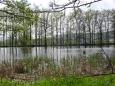 Podcestný rybník u Bílska.