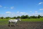 Setkání s koňmi nemá konce. V okolí je několik velkých výběhů a tak mám co fotit.