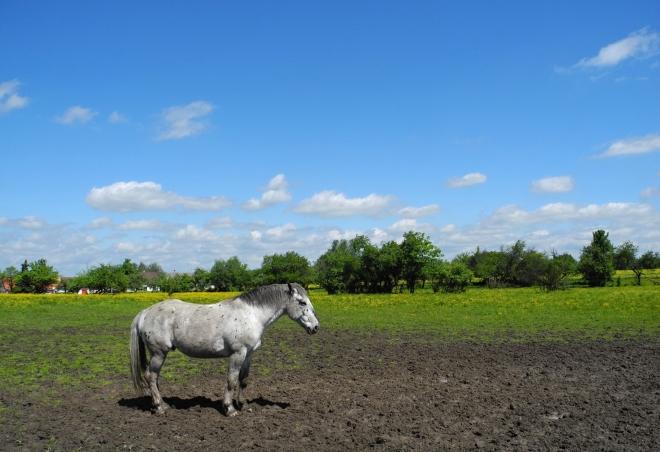 Setkání s koněmi nemá konce. V okolí je několik velkých výběhů a tak je co fotit.