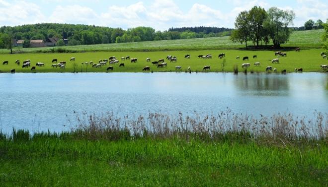 Tvrzský rybník.