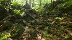 sedýlkem k Jouglovce ...krásně zelené kapradiny ...