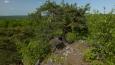 tohle je všemu příkoří odolná borovice ...