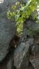 skalní okno mezi věžemi ...