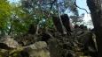 skály a hodně staré stromy ....