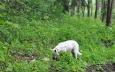 Cestou potkáme i psa, který nás vůbec nevnímá a stará se jen o ulovenou srnu.