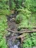 Smrčina je navzdory svému názvu smíšeným lesem mnohdy s převahou buků. K těmto lesům snad bude nyní směřovat celá Šumava, aby se neopakovala situace s přemnoženým lýkožroutem smrkovým.