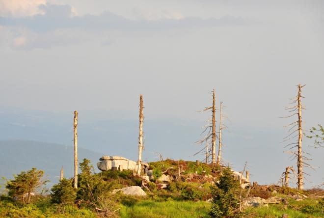 Vrchol Plechého nabízí mnoho dalších pohledů na skalky a kameny rozlehlého vrcholu.