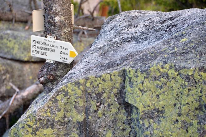 Nedaleko stezky stoupající od Plešného jezera k Plechýmu stál do roku 2009 druhý nejstarší smrk na Šumavě. Jeho stáří bylo odhadnuto na více než 559 let. Ještě starší byl Želnavský smrk, který pokáceli Schwarzenbergové v roce 1866 a kterému bylo 585 let. V roce 2004 po napadení kůrovcem uschl a v roce 2009 jeho suchý kmen dřevorubci z bezpečnostních důvodů pokáceli.