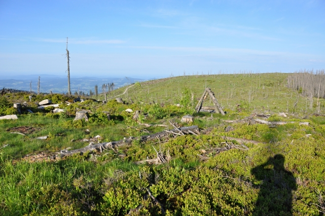 Pohled na rakouskou stranu hranice je jiný než na naší. Zde zatím mají holou pláň, ale to se za deset let zřejmě obrátí. Ve vrcholových partiích se totiž mladé smrčky vůbec nevyskytují. Nemilosrdné slunce je spálilo ještě dřív než mohly vyrůst.