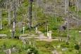 Sestup k Trojmezí odhaluje krajinu bez jediného zdravého stromu. Tady se kůrovec se smrky nepáral. Když se vyhlašoval experiment nezasahování v l. zónách uvádělo se, že mladé a zdravé stromy kůrovec nenapadá a že přežijí. To se bohužel nikde nepotvrdilo a zmlazení se nekoná. Návrat lesa bude pro přírodu běh na dlouhou trať.