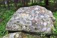 Lesní cesta k Hadímu vrchu vede i kolem nádherně zbarvených kamenů, kdy abstraktním malířem je lišejník zeměpisný.