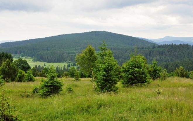 Vysokým hřbetem (1 078m n. m.) vede zelená TZ hezkými bučinami až k Rovině a Dobré Vodě.