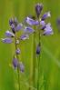 Sestup z Hadího vrchu provází první kapky ze zataženého nebe a také hledání orchidejí a jiných vzácných rostlinek.