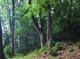 Bučiny pod Formbergem zachraňují okolní smrkové lesní porosty před kůrovcem. Přesto se i zde zásah dřevařů projevil. Vrchol hory Ždánidla je dnes bez vzrostlých stromů. Podobně na tom je většina vysokých vrcholů a hřbetů.