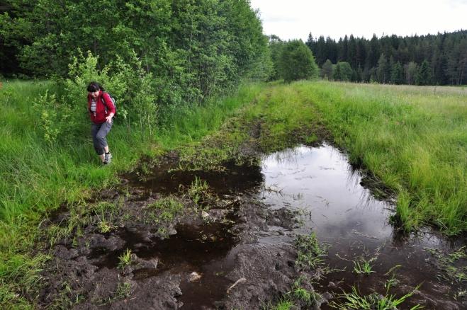 Skot do údolí Frauenthal hnali touto cestou. Již tak dost podmáčený terén kopyta ještě víc rozorala a není vůbec snadné úsek, kde pramení mnoho potůčků, projít.