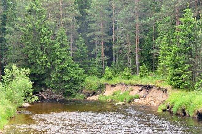 Podemletý břeh ukrajuje další metry a pomalu posouvá řeku k svahu zalesněného kopce.