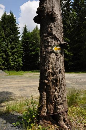 To, že zde několik desetiletí bylo pásmo, kam mohli pouze vojáci pohraniční stráže, je vidět všude okolo nás. Ocelovým lanem omotaný strom, u poeticky nazvaného místa - Šárka, je jedním z důkazů.
