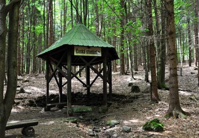Česká studánka je příjemnou zastávkou. Výš už se smrčiny mění ve smíšený les s převahou buků. Cesta se tak stává barevnější a voňavější.