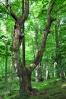 Vstupujeme do přírodní rezervace Herštýn.