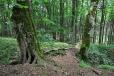 Malebnost místa je podtržena impozantními lípami, v jejichž stínu roste množství chráněných rostlin. Celé vše dokresluje starý dutý javor.