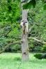 Mluvící strom nedaleko Americké zahrady.