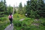 Stoupáme smrkovým lesem, který zde byl vysázen po zničení původního, kdy kyselé deště a následně i kůrovec prakticky zlikvidovaly lesy ve vrcholových partiích hor. Vcházíme do PR Prales Jizera, kde se ponechaly uschlé stromy. I zde byl bohužel les zmlazen a prales moc nepřipomíná. Vzrostlých stromů je minimum.