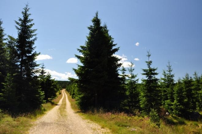 Po zelené TZ jdeme na sedlo Holubníku.