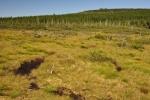 Kousek od slatí Na čihadle leží menší slať u Knejpy.