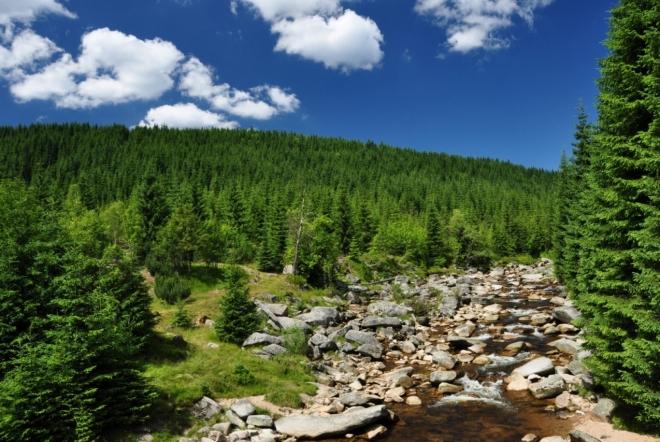 Sucho posledních týdnů odhalilo prakticky všechny kameny v řece. A že jich tu není málo.
