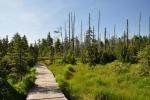 PR Černá jezírka chrání slatě na Středním Jizerském hřebenu.